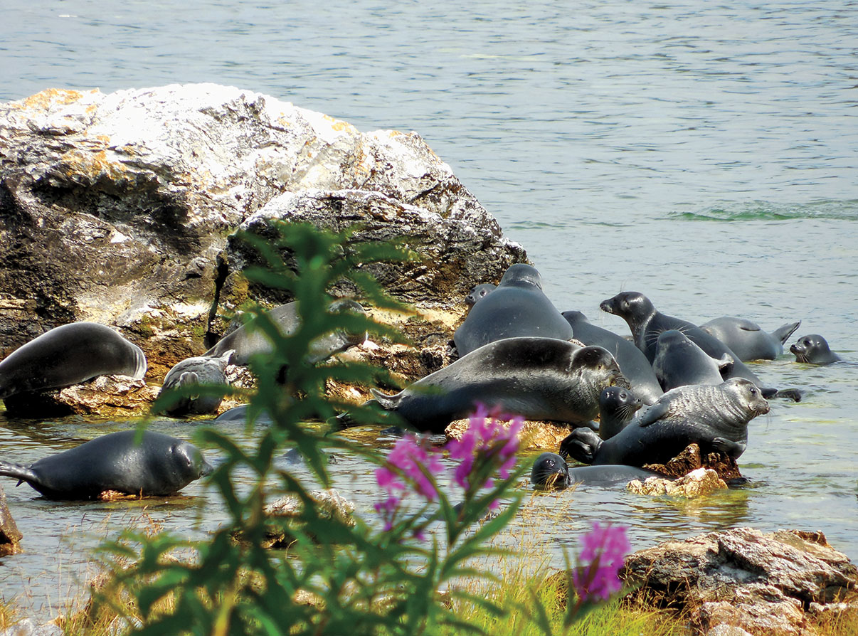 Baikal seals relax on the Ushkani Islands in the middle of the lake.