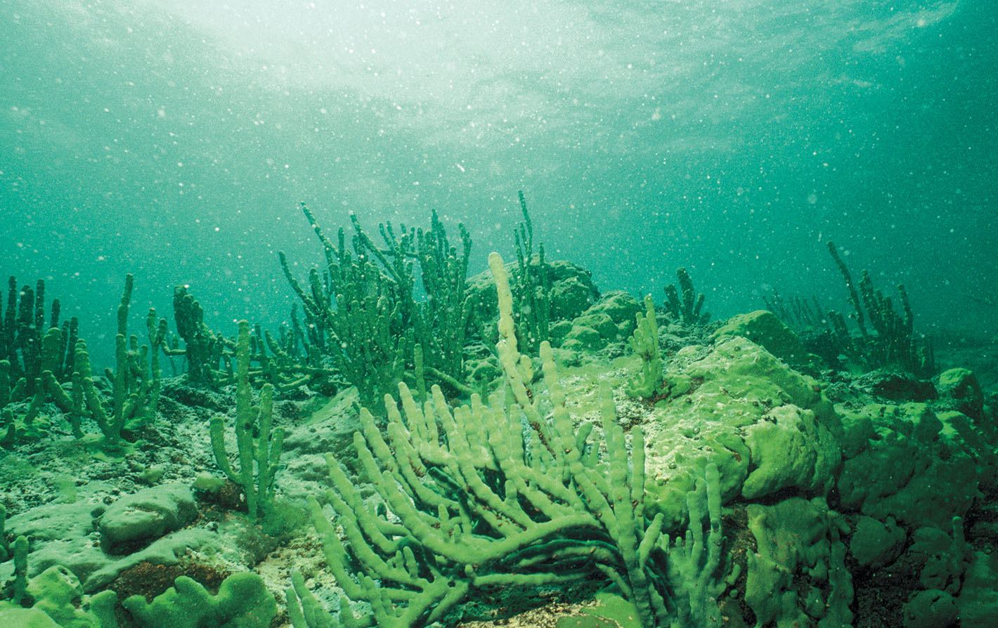 An underwater view of Lake Baikal.