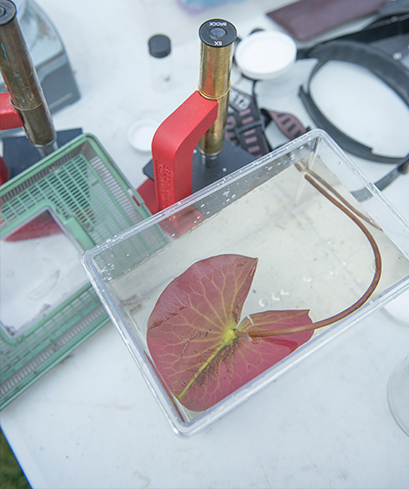 A photo of a water lily pad beside a microscope.