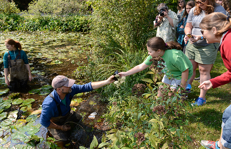 A photo of a group of people exploring the flora and fauna of Paramecium pond. Pictured is a biologist in the water handing plant material to a young girl on shore.