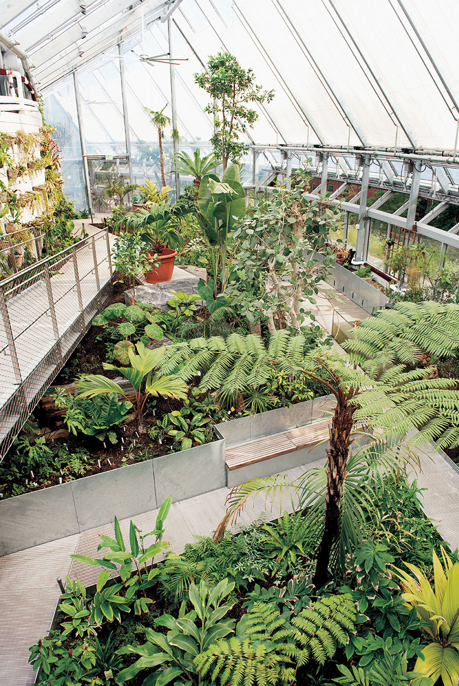 A photo shows a tree fern growing in the new conservatory.