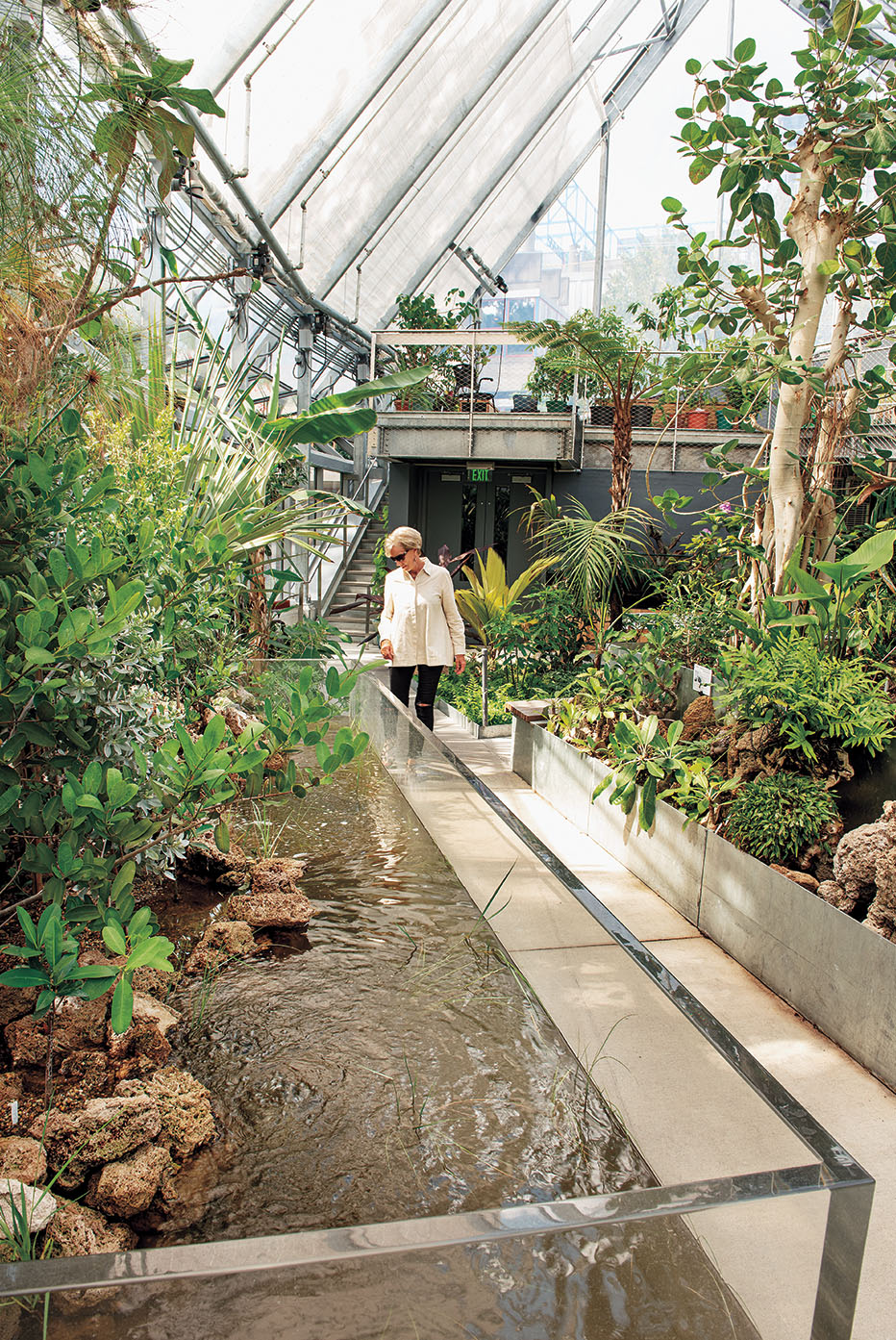 A photo shows a staff member inspecting the mangrove tank in the new conservatory.