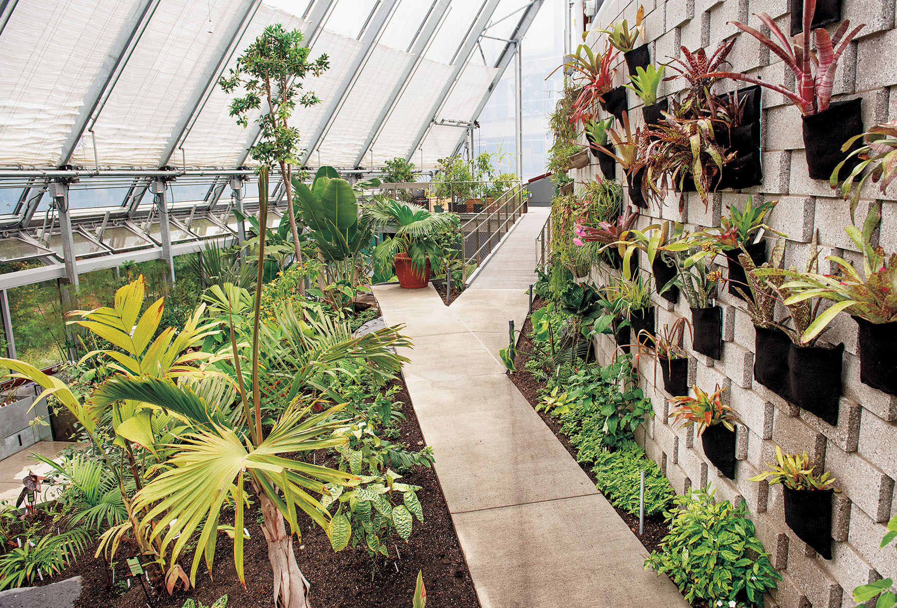 A photo of the dry biome in the conservatory shows cacti, a walkway, and a wall display of orchids and epiphytes.