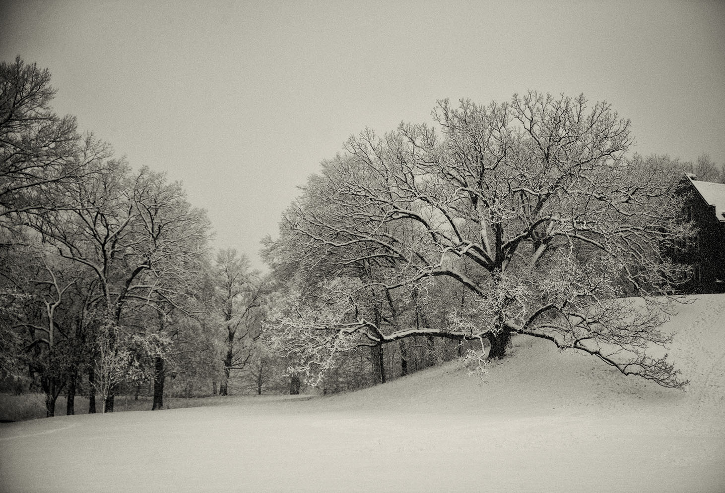 2016: Severance Green, after a heavy snowstorm