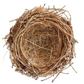 A photo of an empty bird's nest