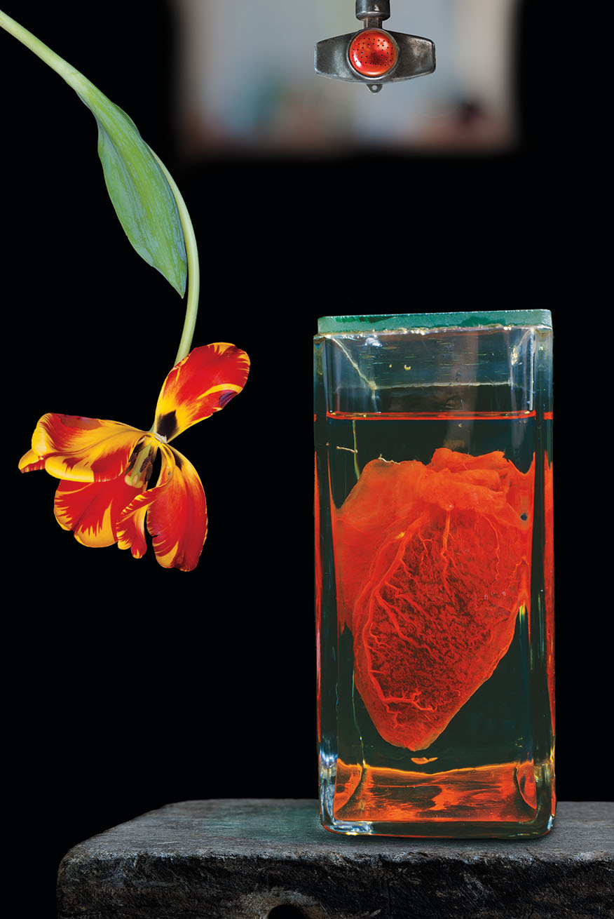 Heart and Flower, a photograph featuring what appears to be a small heart (the organ) encased in glass, with an upside-down red and orange tulip suspended next to it.