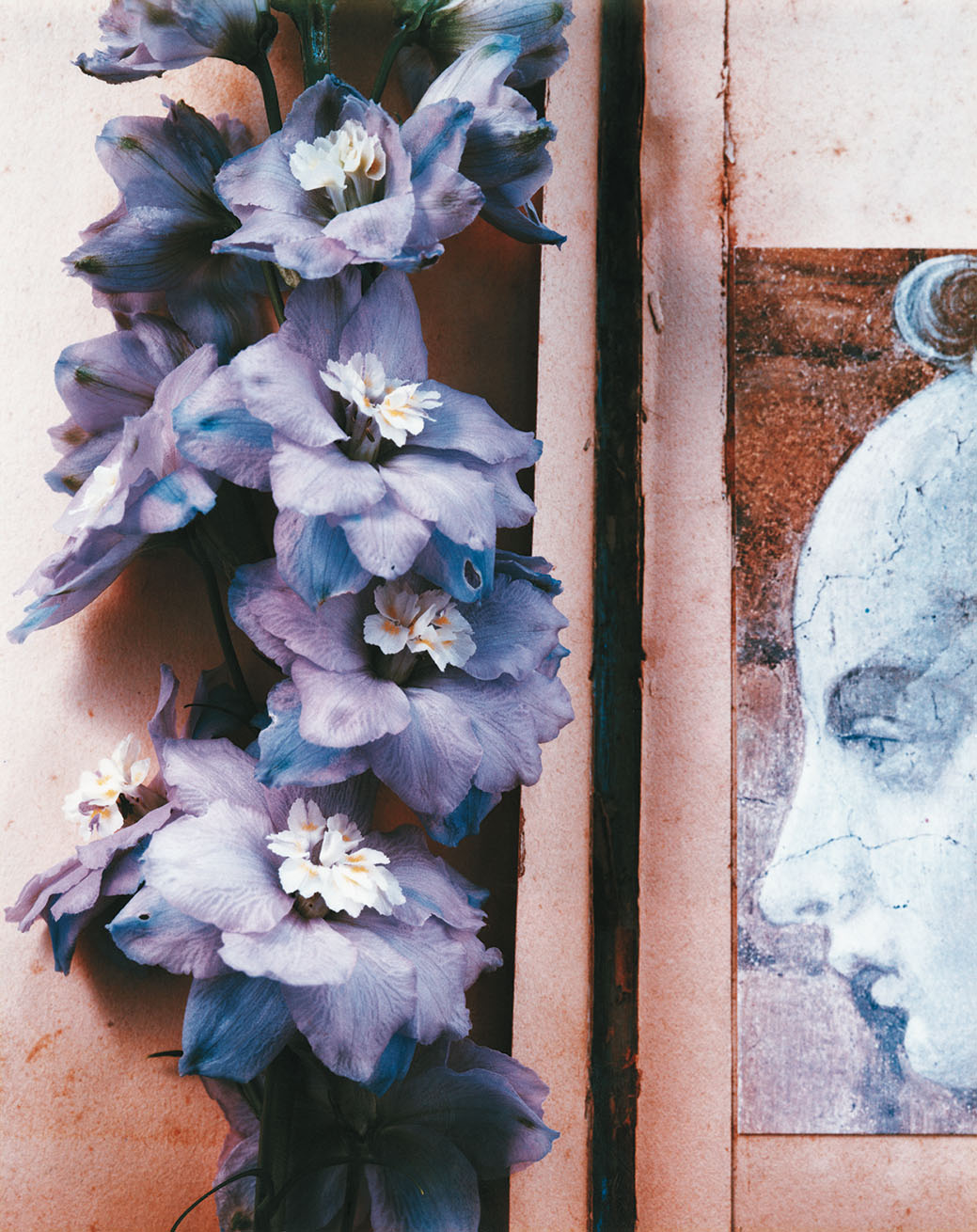 Hybrids, a color photograph featuring blue and purple flowers and an illustration of a woman's head in profile