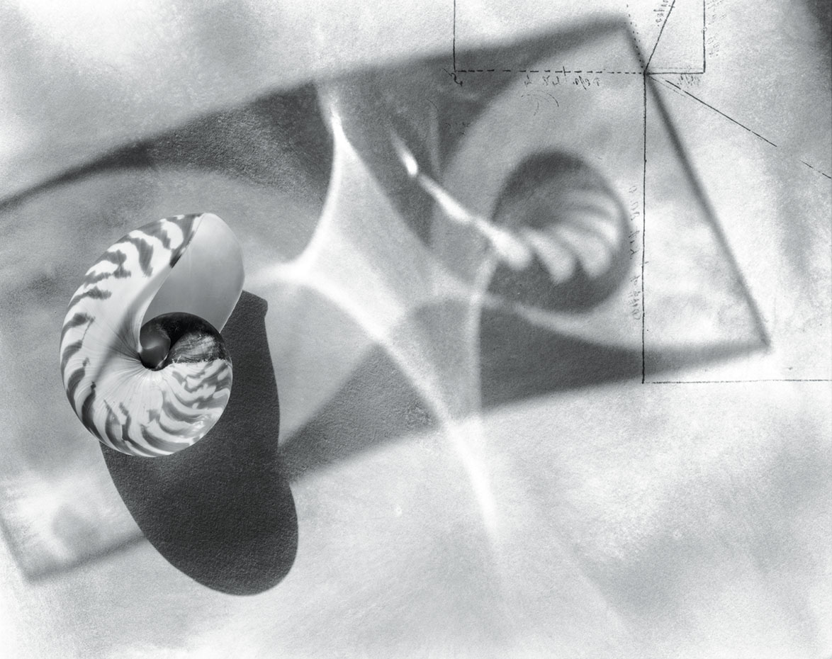 Measuring Space, a black and white photograph featuring a nautilus shell and shadows and beams of light, perhaps cast by a glass object not in the photograph
