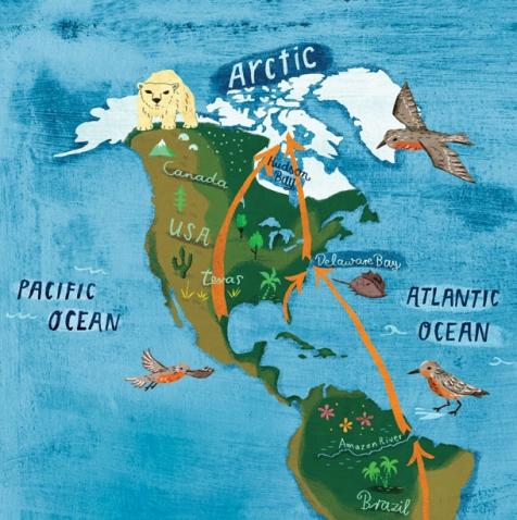 Flight to the Arctic