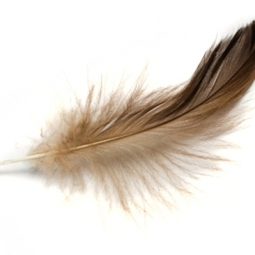 Close-up shot of a feather
