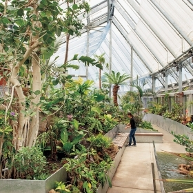 A photo inside the Global Flora conservatory shows a flourishing banyan tree. In the background, a student prepares to hand-water plants.