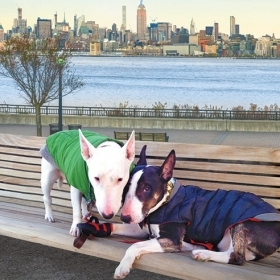 The cover of When Harry Met Minnie is a photo of two bull terriers together on a bench in New York City.