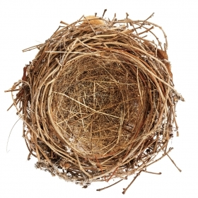 A photo of an empty bird's nest