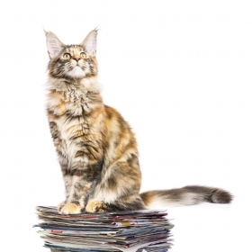A color photo shows a fluffy cat seated on a pile of magazines and papers.