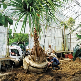 A tree in the greenhouses is lifted out by crane